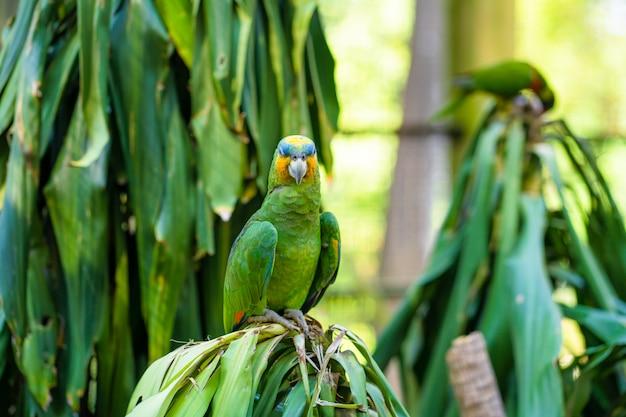 Papagaios de lorikeet do arco-íris em um parque verde.