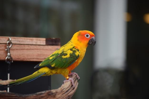 Papagaios são lindos pássaros e são animais de estimação.