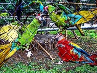 Papagaios zoológico