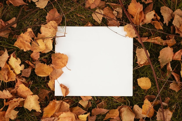 Papel branco em branco nas folhas secas