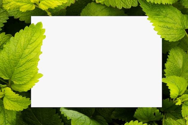 Papel branco liso rodeado por folhas de erva-cidreira verde