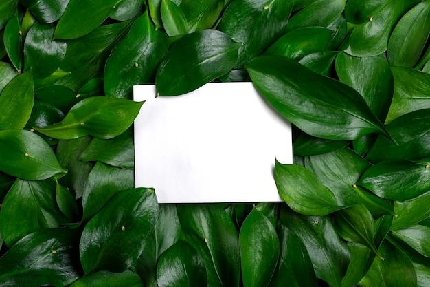 Papel de parede abstrato layout criativo feito de folhas de menta verde escuro com nota de cartão de papel