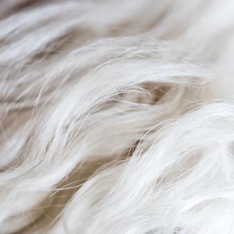 Papel de parede branco da textura do fundo da pele de lãs dos cães.