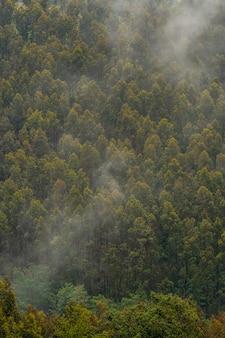 Papel de parede de árvores na montanha cheia de névoa