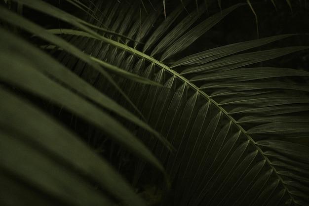 Papel de parede de folha escura, imagem estética full hd