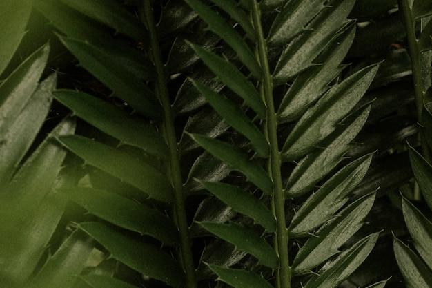 Papel de parede de folha estética, imagem de natureza tropical