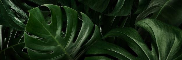 Papel de parede de folhas verdes monstera