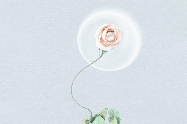 Papel de parede de fundo abstrato, flor de rosa branca