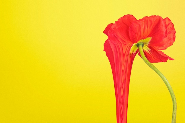 Papel de parede de fundo de flores coloridas, design estético trippy