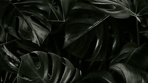 Papel de parede de fundo de folhas tropicais monstera
