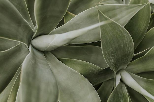 Papel de parede de fundo de planta suculenta, imagem escura de natureza estética
