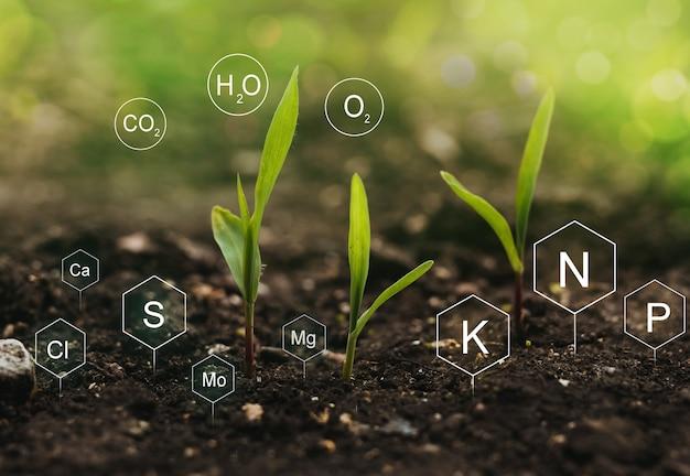 Papel dos nutrientes minerais na planta de milho e na vida do solo com o ícone digital de nutrientes minerais.