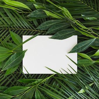Papel em branco branco sobre as folhas verdes frescas