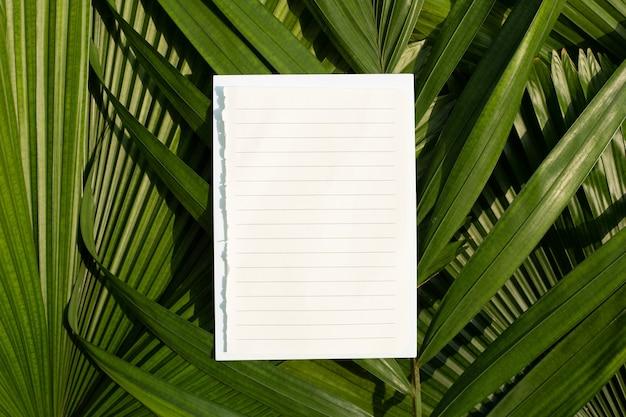Papel em branco em folhas de palmeira tropical