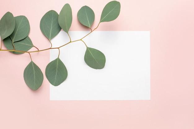 Papel em branco, galhos de eucalipto em fundo rosa pastel