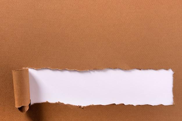 Papel rasgado, marrom, longo, rolado, borda inferior, quadro, fundo branco