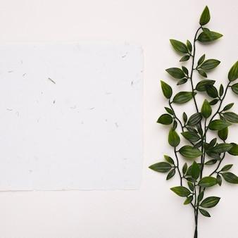 Papel texturizado branco perto dos galhos verdes artificiais com folhas no pano de fundo branco