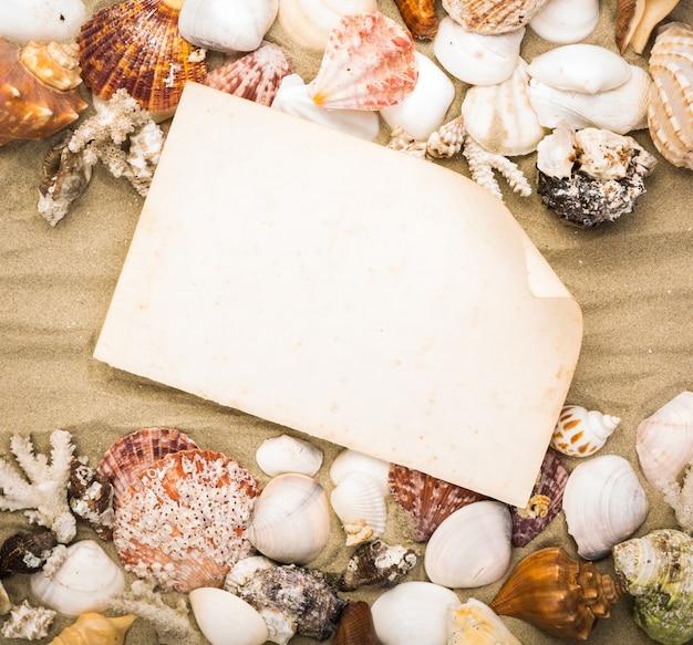 Papel velho com conchas quadro