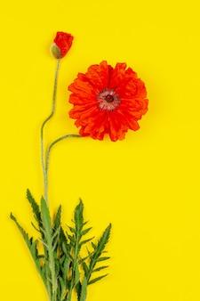 Papoilas vermelhas de flores sobre um fundo amarelo