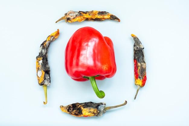 Paprica fresca entre pimentas podres com mofo em uma superfície cinza. conceito de velhice e juventude.