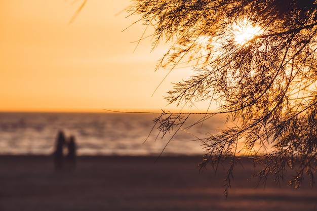 Par caminhando, praia, em, pôr do sol, outfocus