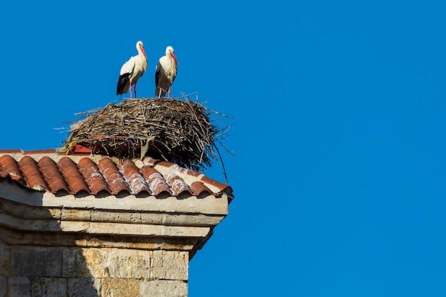 Par de cegonhas fazendo um ninho no telhado de uma igreja. dia de sol e céu azul.