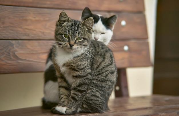 Par de gatos sentados em um banco de madeira, um atrás do outro.