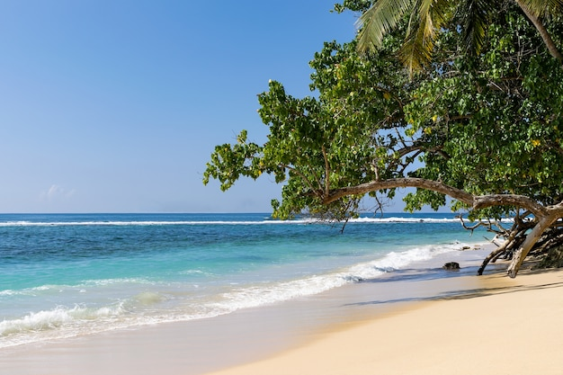 Paraíso de praia tropical