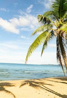 Paraíso tropical de férias com praias de areia branca folha de palmeira de coco