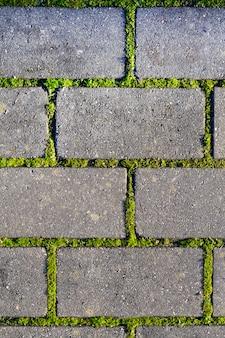 Paralelepípedos close-up com uma grama verde nas costuras