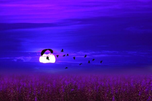 Paramotor sobre campo de lavanda segue pássaros voando no céu noturno