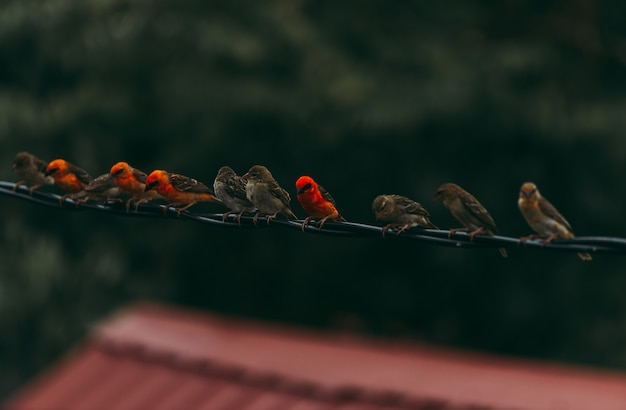 Pardais de madagascar na fila. grupo de amigos a passar tempo juntos