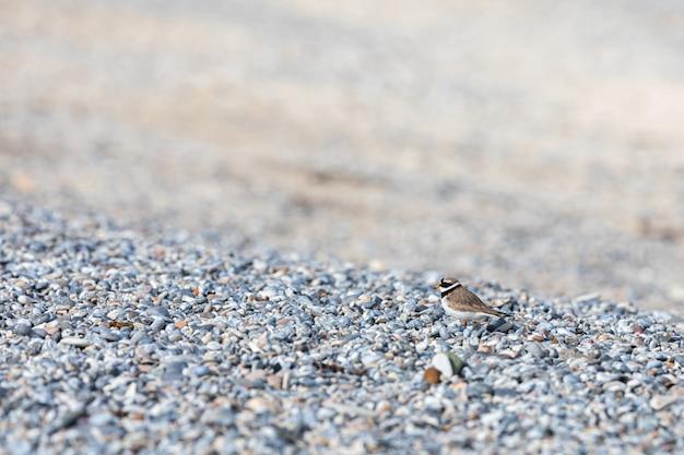 Pardal e estrada do pássaro animal