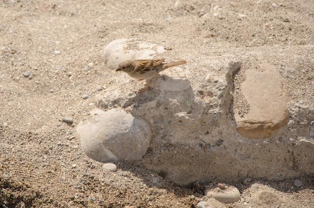 Pardal fino senta-se em uma pedra em clima quente