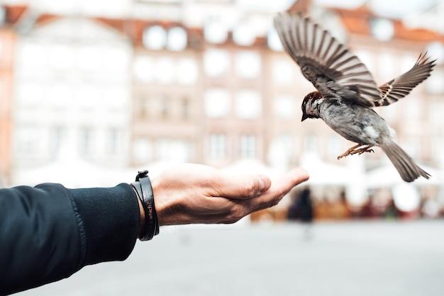 Pardalzinho come com as mãos na antiga praça de varsóvia, polônia