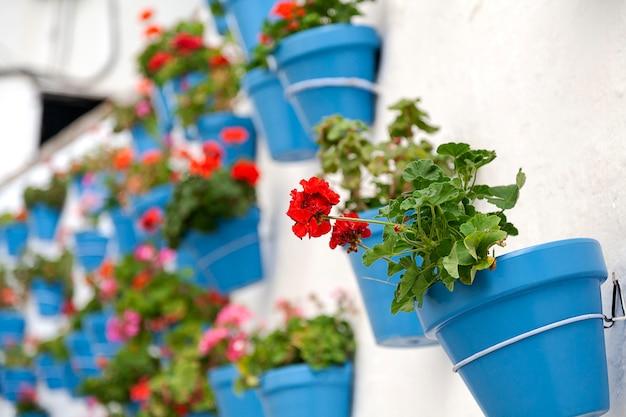Parede branca com vasos de flores