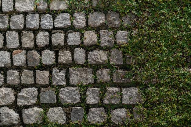 Parede com plantas e fundo de pedra