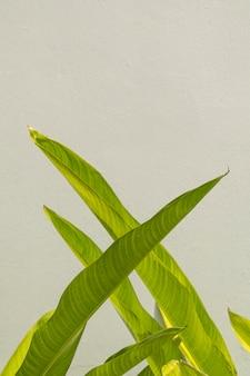 Parede de cimento cinza com fundo de folhas verdes de ave do paraíso