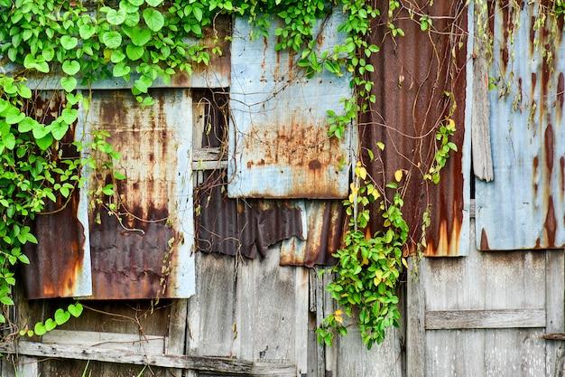 Parede de ferro galvanizado velho e enferrujado com textura de hera