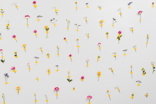 Parede de flores anunciando o tempo de primavera