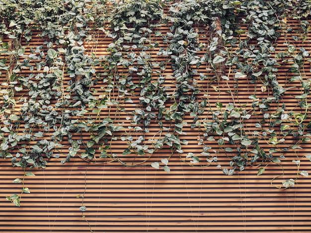 Parede de painéis de madeira e textura de fundo de galhos de folhas em crescimento