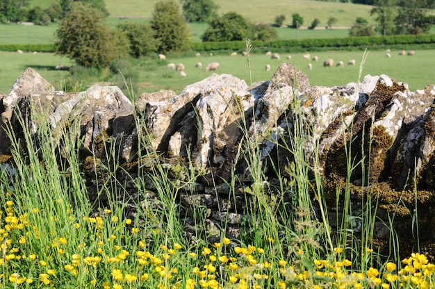 Parede de pedra em inglês interior de cotswolds