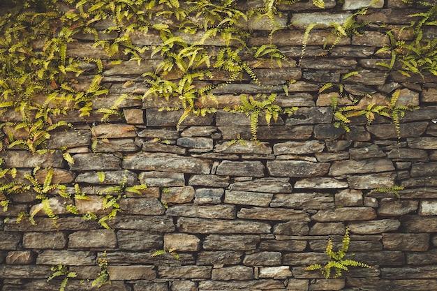 Parede de pedra marrom-escura consistindo de tijolos maciços e trançada com plantas trepadeiras geométricas