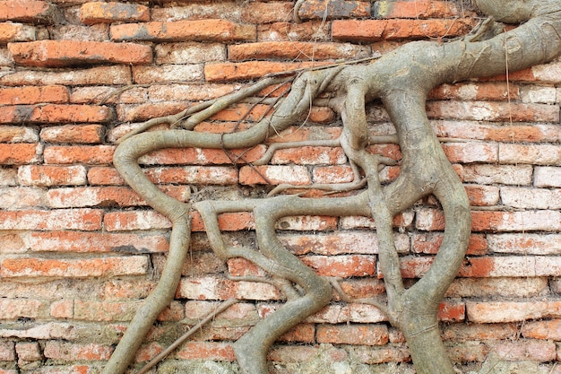 Parede de tijolo coberta de madeira de raiz, tailândia Foto Premium