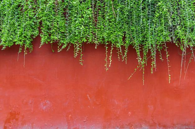 Parede de tijolo vermelho com hera verde em cima da parede.