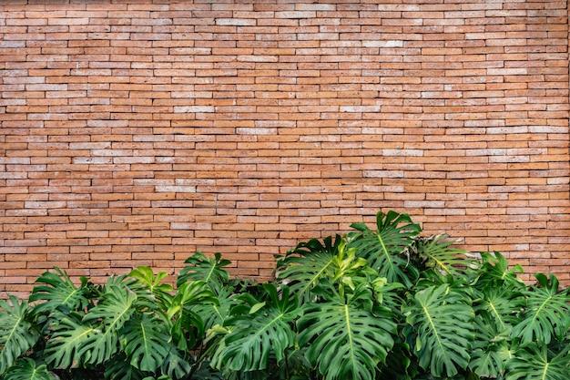 Parede de tijolos com grandes folhas verdes. conceitos da textura e do fundo da parede.