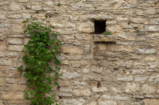Parede de tijolos de um antigo castelo