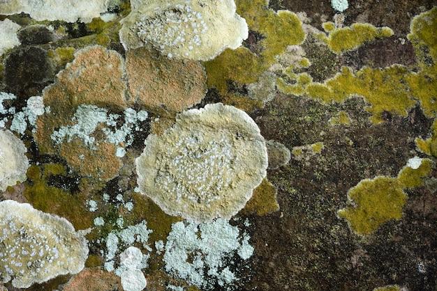 Parede do molde do musgo