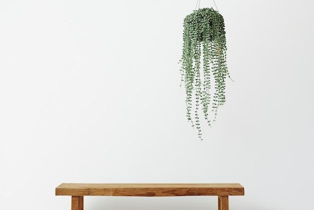 Parede mínima com planta de videira anjo e banco de madeira
