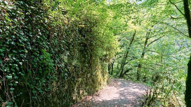 Parede rochosa na floresta com folhagem saliente e grama verde
